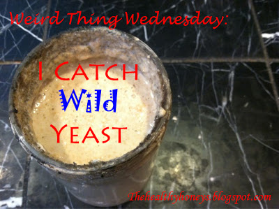 I Catch Wild Yeast