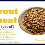 How to Sprout Wheat