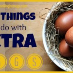 12+ Ideas of What To Do With Extra Eggs