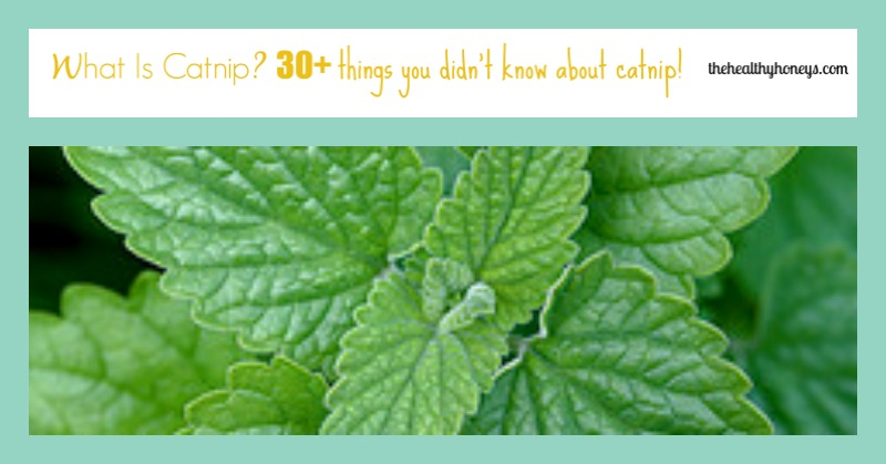 What is catnip?