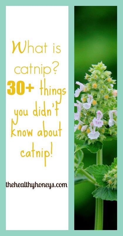 pintrest title catnip