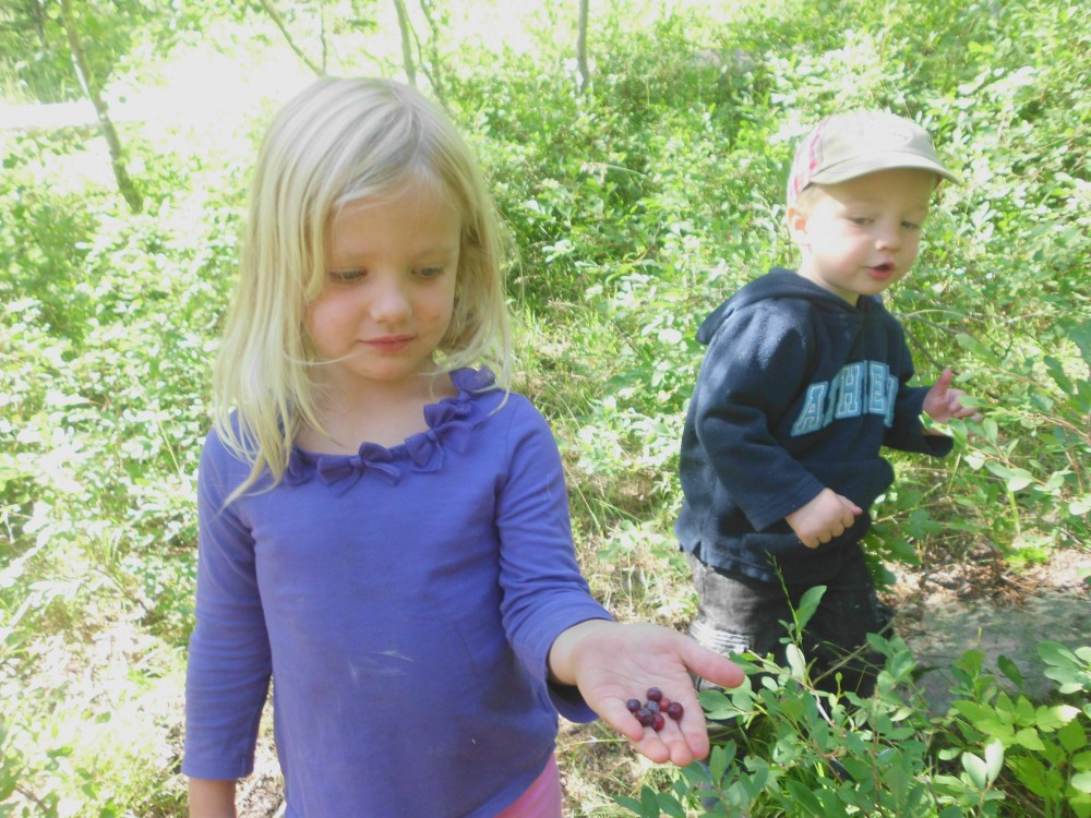 huckleberry picking