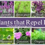 Top 10 plants that repel unwanted insects
